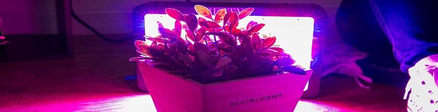 Tipps und Tricks bei der Pflanzenzucht mit LED Grow Light