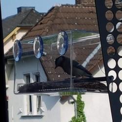 Vogelhaus Vogelfutterspender Vogelfutterstation Acryl mit Saugfuss