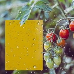 20er Fliegenfalle Sticker Insektenfalle Fliegenfänger für Fliegen