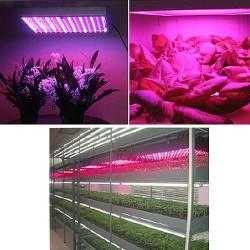 Pflanzenleuchte Pflanzenlampe Pflanzenlicht Zimmerpflanzen LED 15W